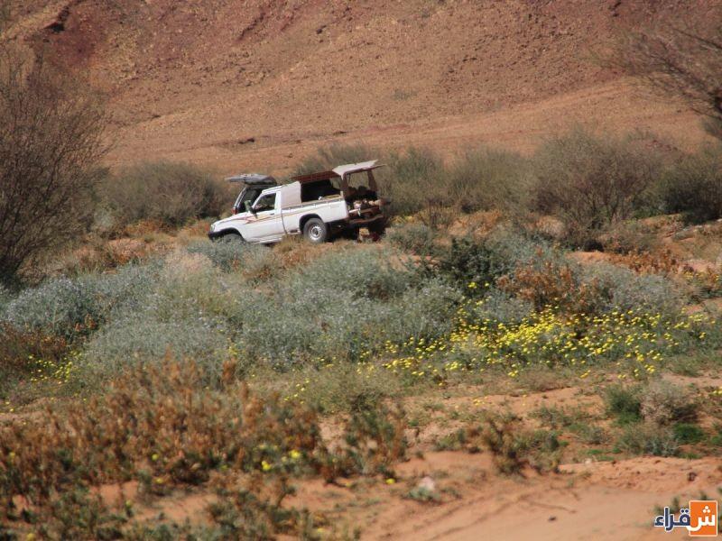منتزه الرايغة البري بأشيقر يجذب المتنزهين
