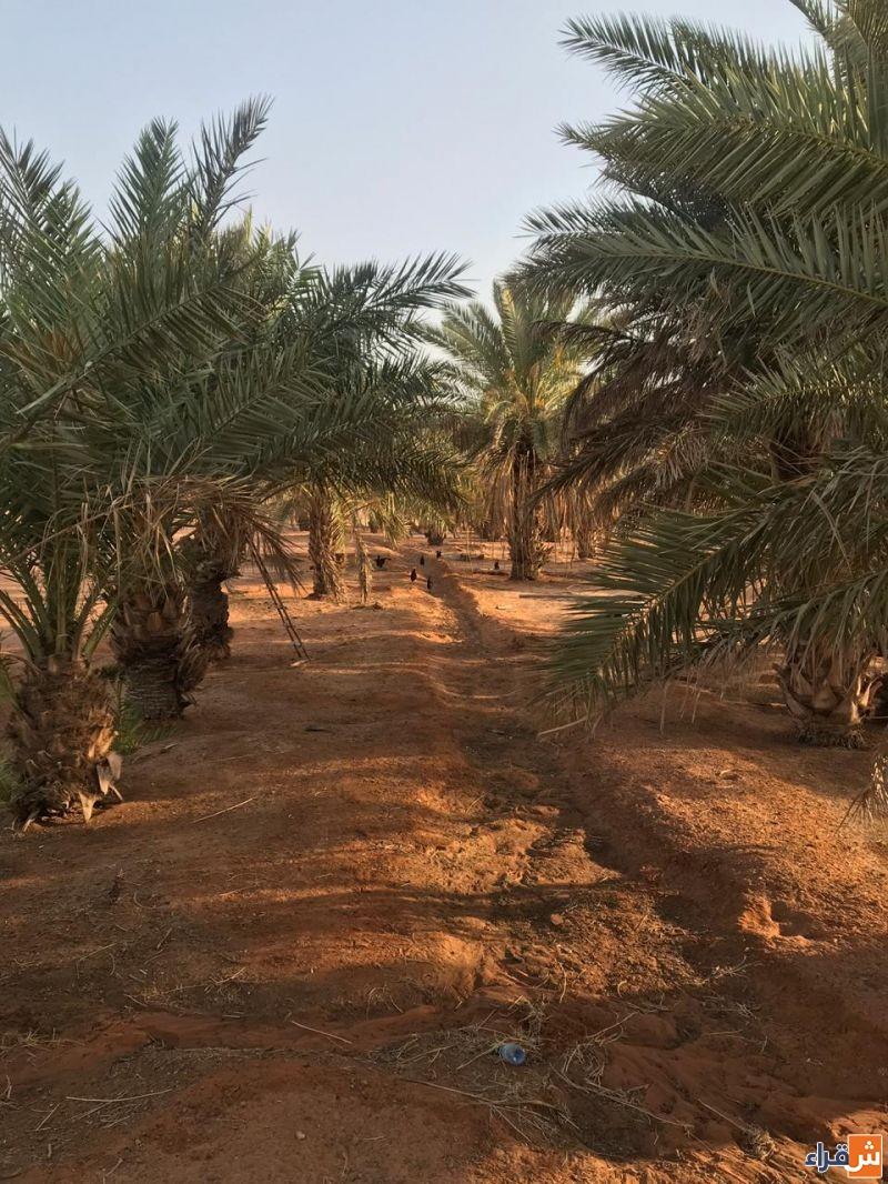 للبيع مزرعة حرة لا يوجد عليها قروض في الصحن غرب شقراء لدى إعمار للعقارات