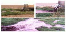 مخلفات الدواجن تلوث الأودية والشعاب بمحافظة شقراء
