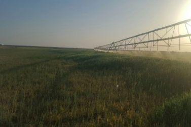 للبيع في شقراء مزرعة قائمة تبعد عن خط الحجاز كيلو واحد لدى إعمار للعقارات