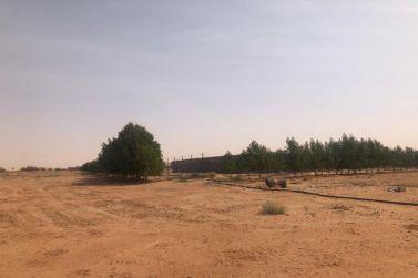 للبيع مزرعة غرب شقراء لدى المستشار للعقارات