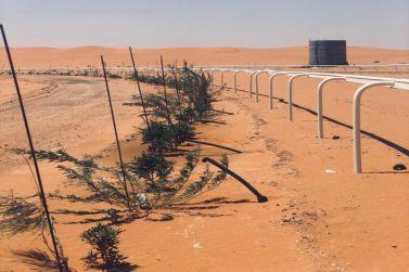 ضمن برامجها الزراعية.. بلدية القصب تغرس أكثر من (4600) شجرة في روضة العكرشية وميدان الفروسية