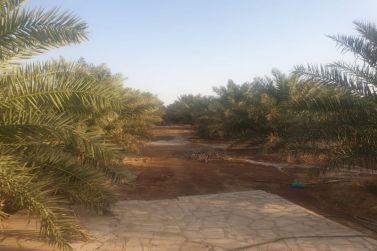 للبيع مزرعه قائمه في الحماده بشقراء لدى إعمار للعقارات