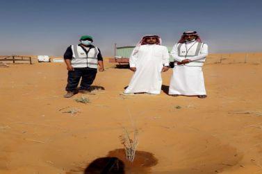 تحت شعار ( لنجعلها خضراء ) مكتب وزارة البيئة والمياه بشقراء يلزم اصحاب المخيمات المصرحة بزراعة شتلة من الاشجار