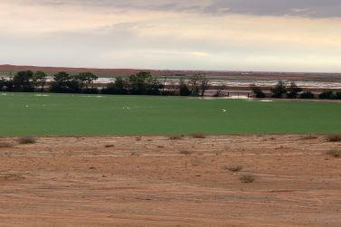 للبيع مزرعة نموذجية بالمستوي شمال شقراء 60 ك