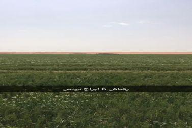 للبيع مزرعة غرب شقراء 30 ك